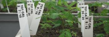 16. Wageningen University Greenhouse Experiments